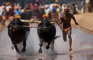 Kambala ban: Committees from DK, Udupi likely to meet CM today