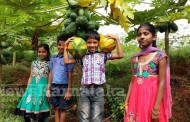 Keddalike School shows how 'temple of learning' can become 'garden of harvesting'